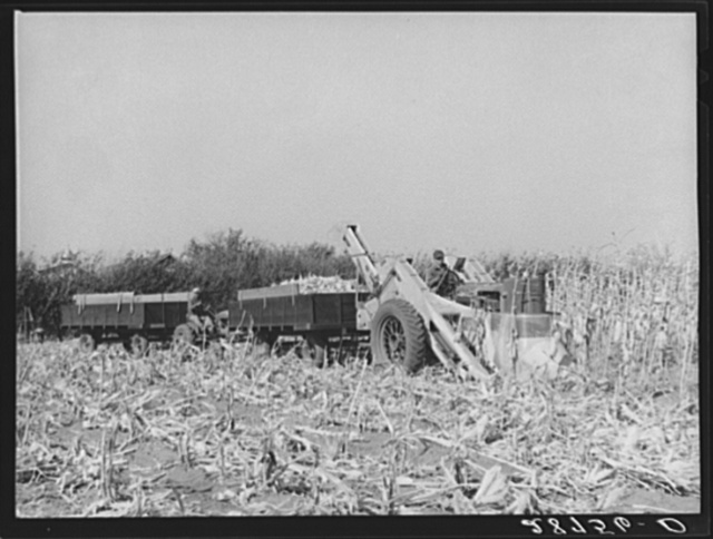 Mechanical corn picker. Fred Coulter farm. Grundy County, Iowa