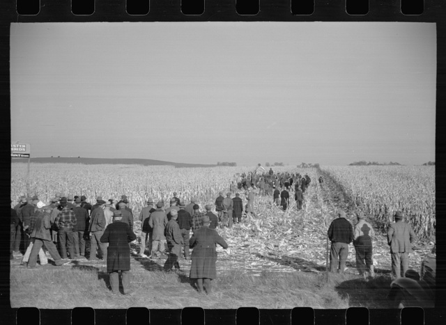 Mechanical cornhusking contest, Hardin County, Iowa
