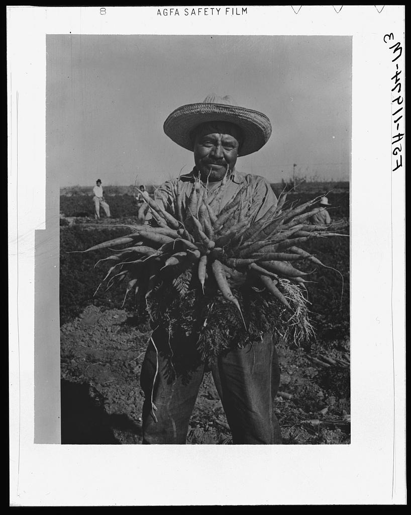 Mexican carrot worker. Edinburg, Texas