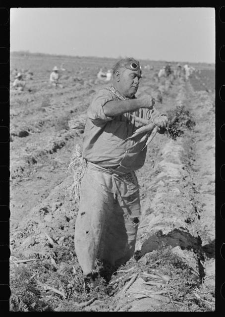 Mexican carrot worker, Edinburg, Texas