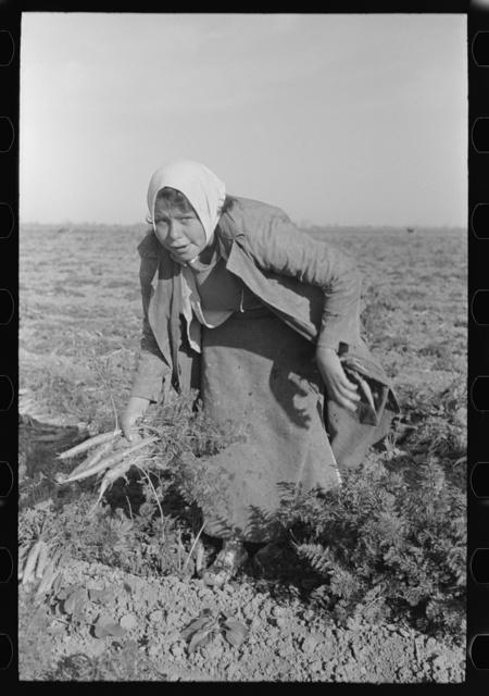 Mexican girl, carrot worker, near Edinburg, Texas