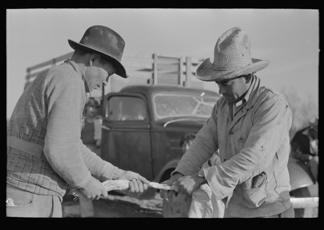 Mexican labor contractor and worker cutting straw ties into proper length, near Santa Maria, Texas