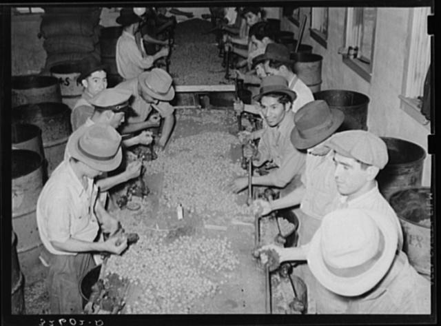 Mexican pecan shellers cracking nuts. Union plant, San Antonio, Texas