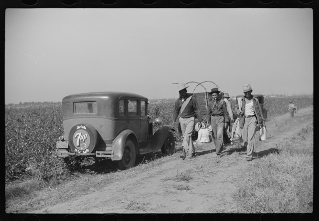 Mexican seasonal laborer returning home after picking cotton on Hopson Plantation, Mississippi