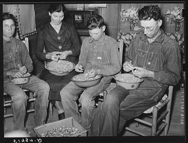 Mr. and Mrs. E.H. Wise, and sons shelling peanuts for planting this year. They shell about fifty bushels, the yearly task of all families in this section at this season. Coffee County