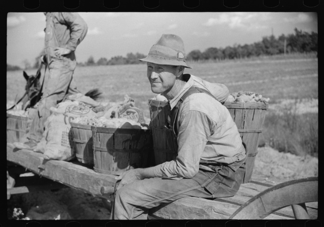 Mr. Foushee's neighbor who was helping them pick up and load wagon of sweet potatoes. He received a small share.  On highway No. 144 near intersection with highway No. 14. Orange County, North Carolina