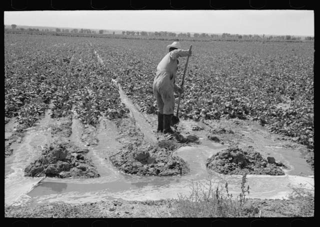 Mr. Johnson, FSA (Farm Security Administration) client, with part interest in cooperative well, irrigating sugar beets. Syracuse, Kansas