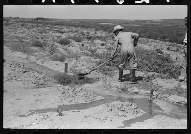 Mr. Johnson, FSA (Farm Security Administration) client with part interest in cooperative well using a makeshift dam of tumbleweeds and board in order to divert water from irrigation ditch to field, Syracuse, Kansas
