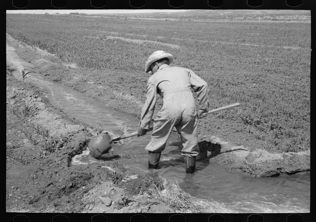 Mr. Johnson, FSA (Farm Security Administration) client with part interest in cooperative well, using a makeshift dam of tumbleweeds and board in order to divert water from irrigation ditch to field, Syracuse, Kansas
