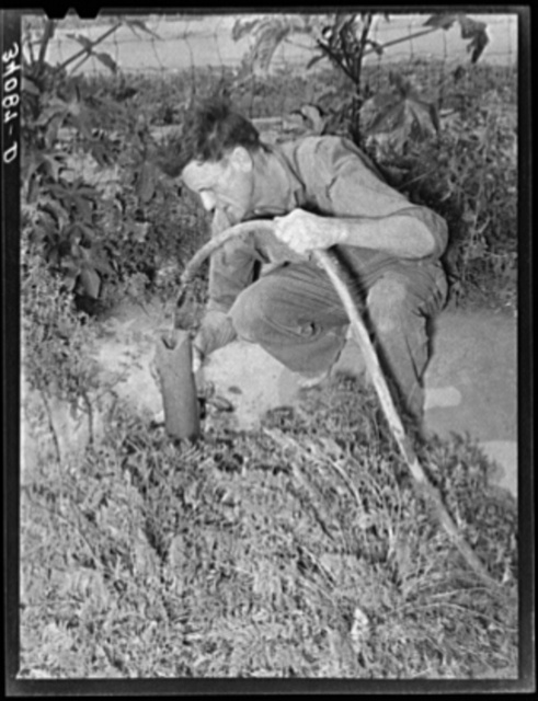 Mr. Schoenfeldt, FSA (Farm Security Administration) client, watering tile garden. Sheridan County, Kansas. This garden has provided him vegetables throughout the summer