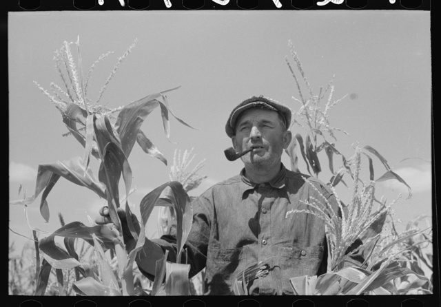 Mr. Wright, tenant farmer of Mr. Johnson and in cooperative with him in irrigation well, standing amidst the corn he has raised this year. Syracuse, Kansas