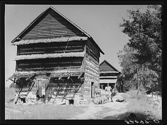 Mrs. Compton and her four year-old son, Billy, taking sticks of tobacco out of barn to strip house. They are tenants and the Negro owner lives in Mebane. This is a part of a prosperous Negro settlement between Carr and Cedar Grove, Orange County, North Carolina. See captions 52055-D and 52080-D. See general notes on subregion. September 28, 1939. Number four