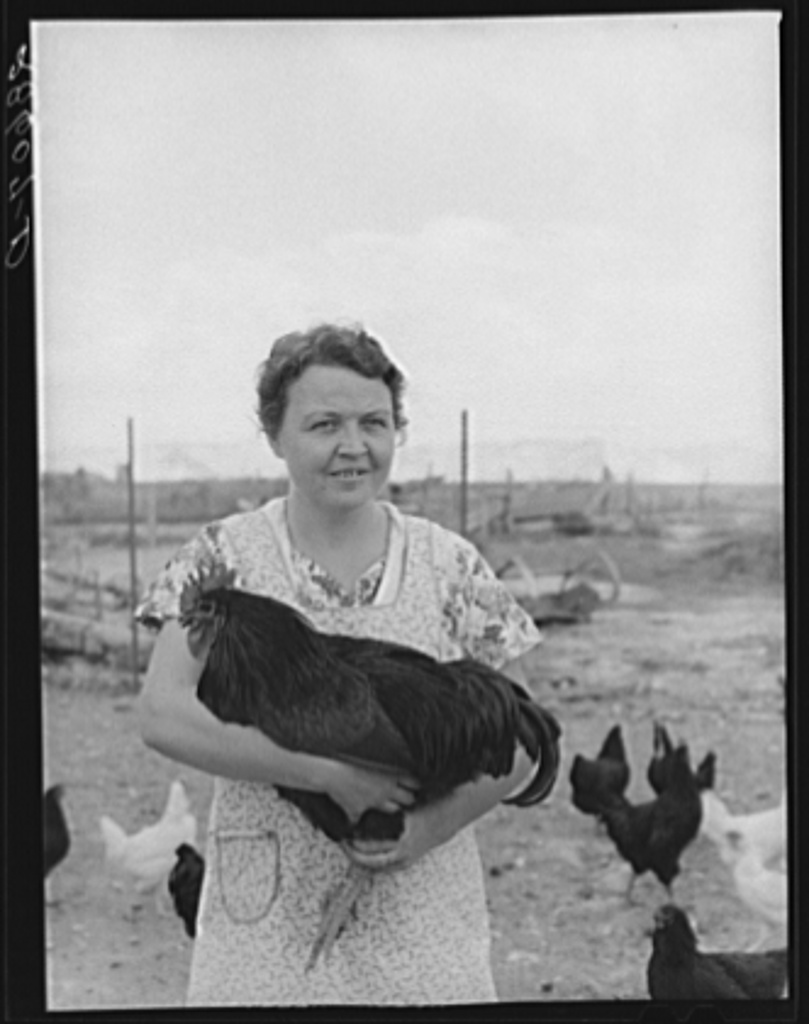 Mrs. Thomas Beede with prizewinning rooster. Western Slope Farms, Colorado