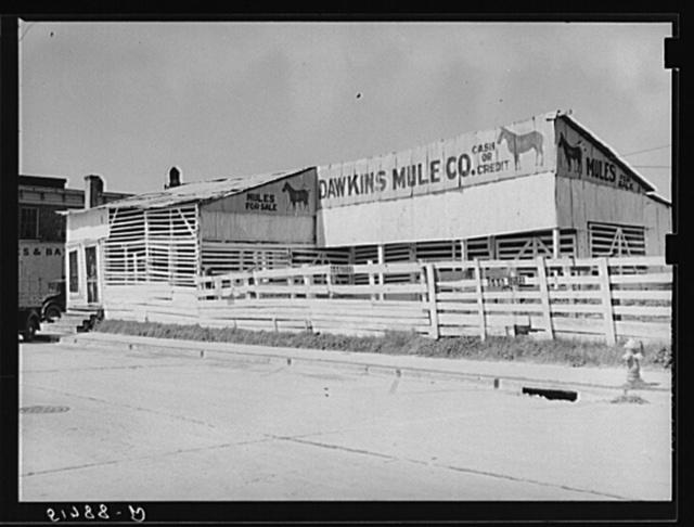 Mule auction stables. Monticello, Florida