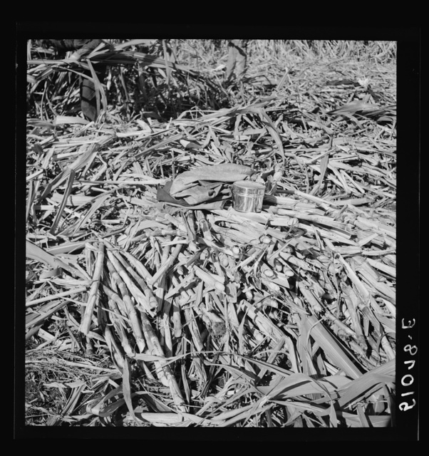 Negro cane cutter's dinner pail and jacket on heap of cut sugarcane for USSC (United States Sugar Corporation). Clewiston, Florida