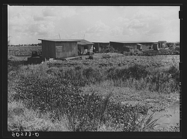 Negro migrant agricultural workers' quarters by irrigation and drainage ditch near Belle Glade, Florida