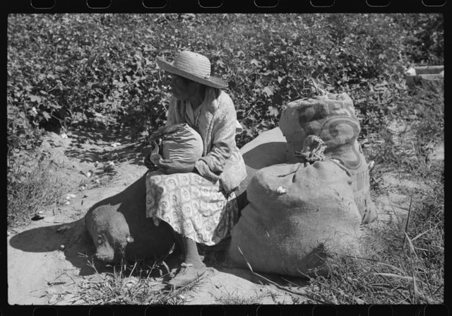 Negro tenant sitting on sacks of cotton in field, Marcella Plantation, Mileston, Mississippi Delta, Mississippi