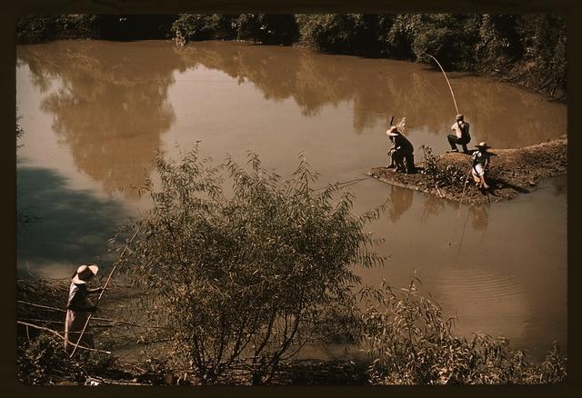 Negroes fishing in creek near cotton plantations outside Belzoni, Miss.