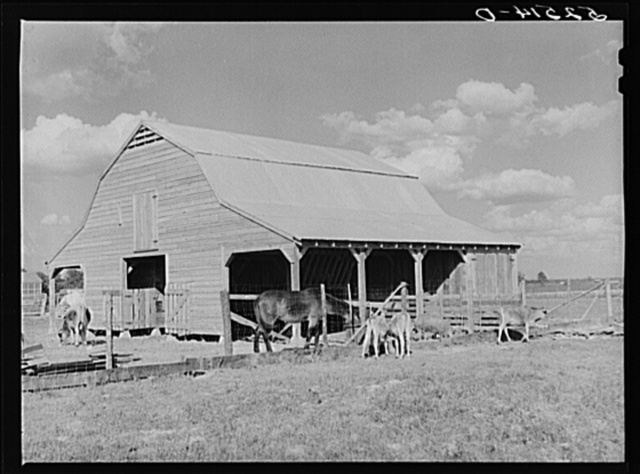 New barn and livestock belonging to white tenant purchase family, Crowell. Near Isola, Mississippi Delta