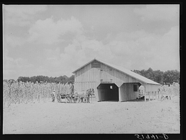 New mules and barn of Frederick Oliver, tenant purchase client, Summerton, South Carolina