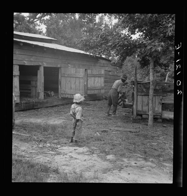 Noon time chores of Negro tenant farmer: feeding the pigs. Granville County, North Carolina