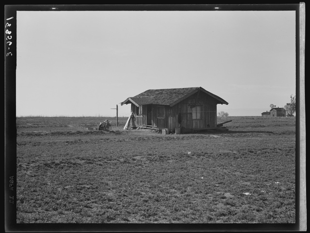 "On the plains west of Fresno, California. Family of seven from Oregon dairy ranch which they lost. ""We tried to get too big, I guess. Milk cans are all that's left of the dairy. Now pick bolls to make fifty cents to one dollar a day. We can't work every day or maybe we could get by."" Rent for house without water or sanitation -six dollars per month. Plan next to pick fruit. ""They say if you come to California, you always come back, but I'm willing to leave it."""