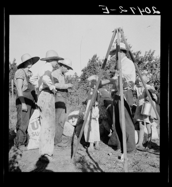 Oregon, Marion County, near West Stayton. Weighing beans at scales on edge of field. Rate: one dollar per 100 pounds. General caption 46