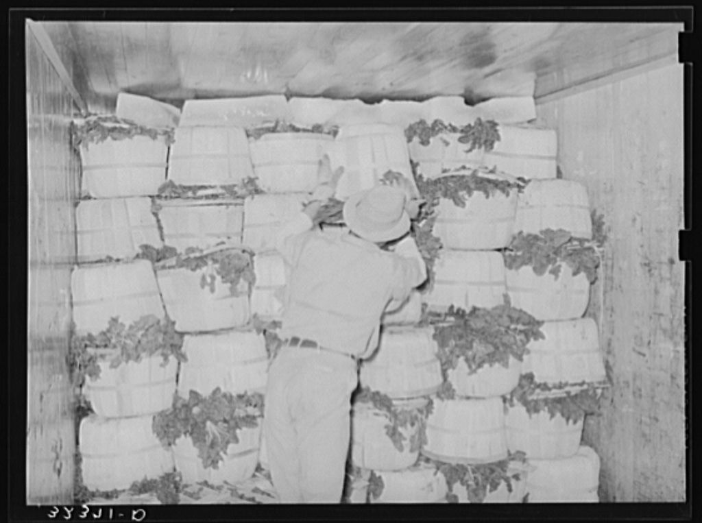 Packing spinach in refrigerator car. La Pryor, Texas