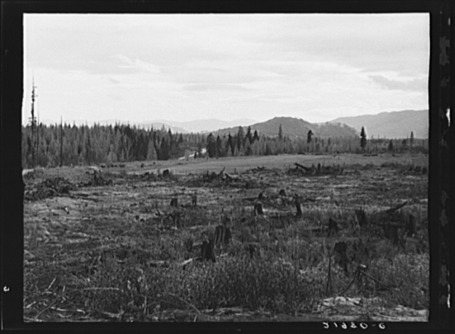 Part of eighty-acre farm showing cleared pasture land and uncleared piece. Bonner County, Idaho