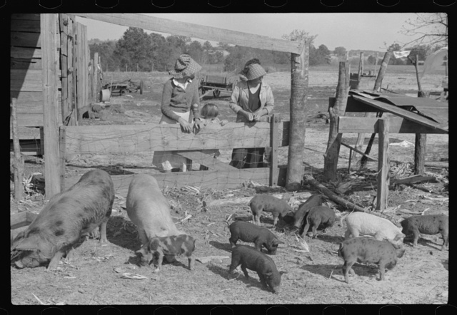 Part of George Cowley's family (rural rehabilitation), looking over pigs in sty. Pike County, Alabama