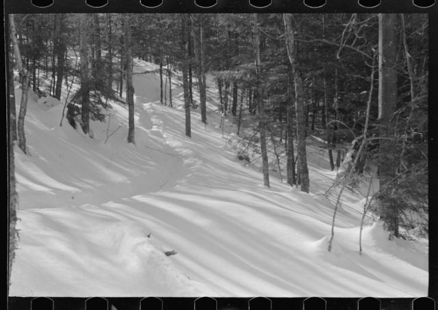 Path leading to lumbermen's shack near Barnard, Windsor County, Vermont