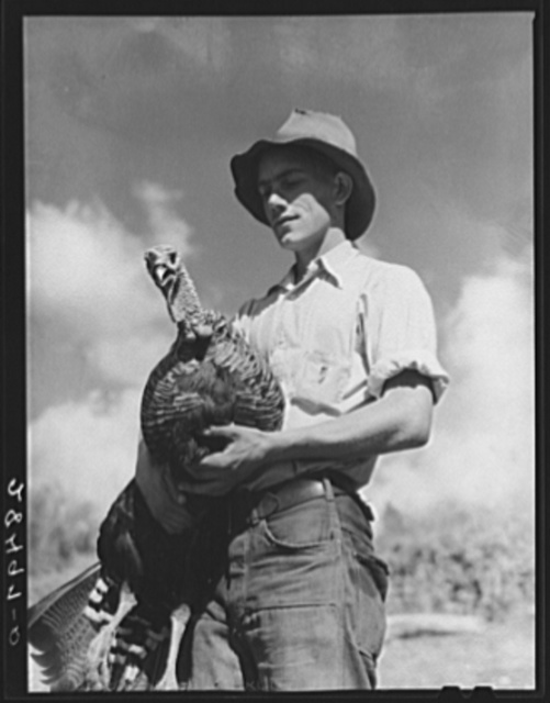 Paul Arnold, son of FSA (Farm Security Administration) client. Chaffee County, Colorado. Herding turkeys