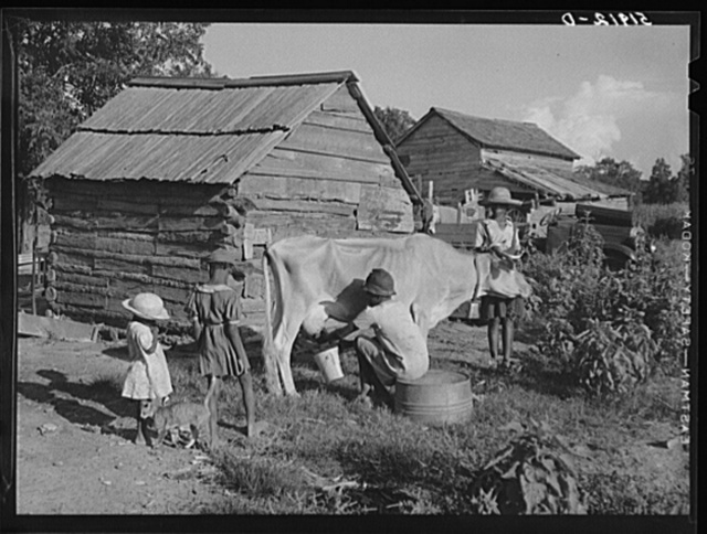 Pauline Clyburn, Manning, Clarendon County, South Carolina, rehabilitation client, has her children milking cows