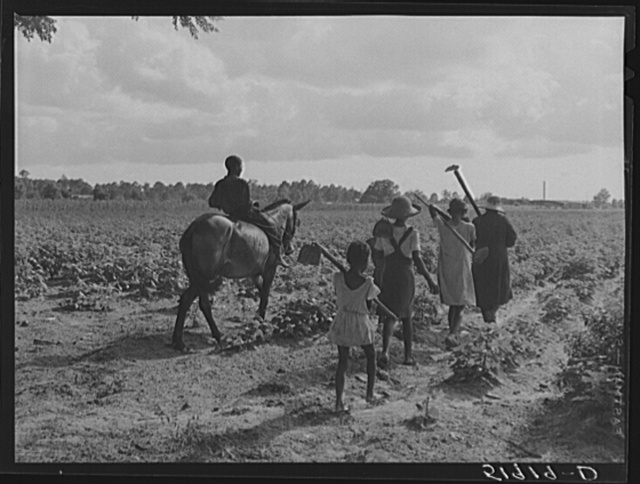 Pauline Clyburn, rehabilitation client, and her children going to chop cotton. Manning, Clarendon County, South Carolina