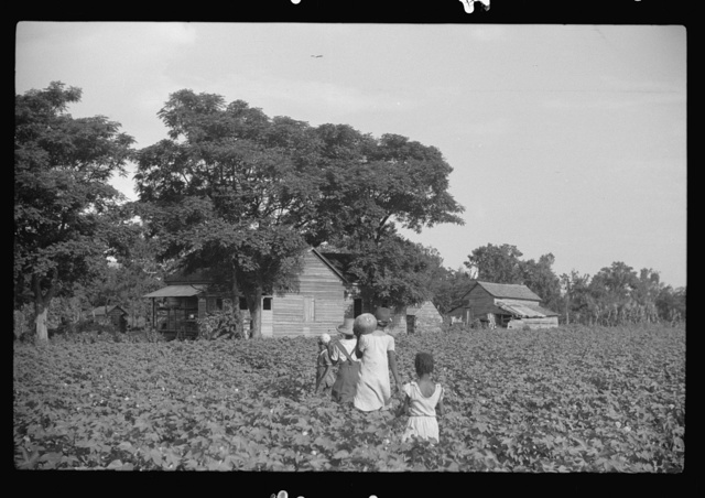 Pauline Clyburn's children, rehabilitation borrowers, coming out of field, Manning, Clarendon County, South Carolina