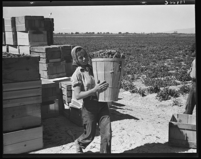 Pea picker. Imperial Valley, California