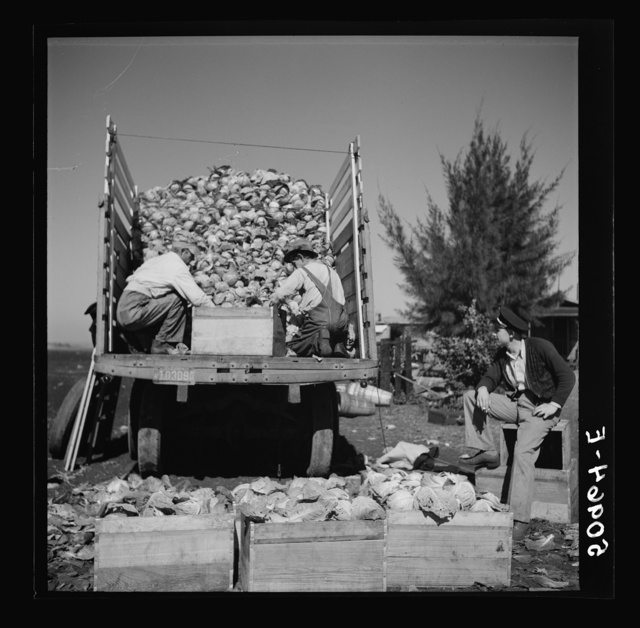 Pea pickers. Belle Glade, Florida