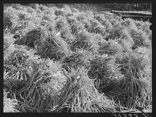 Pile of mill-turned sticks near Bridgewater, Vermont