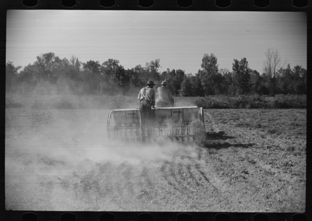 Planting oats on plantation after cotton harvest is over,  Mileston, Mississippi Delta, Mississippi