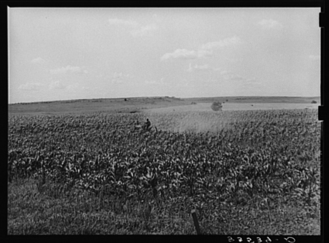 Plowing corn. Wagoner County, Oklahoma