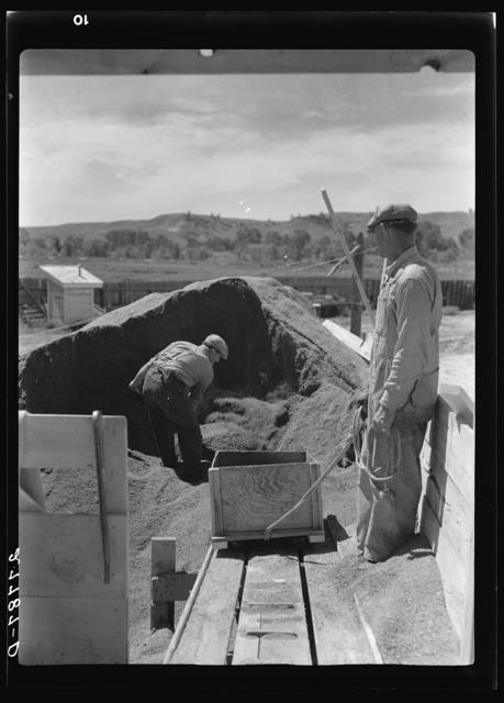 Preparing poison bait in grasshopper control program. Forsyth, Montana