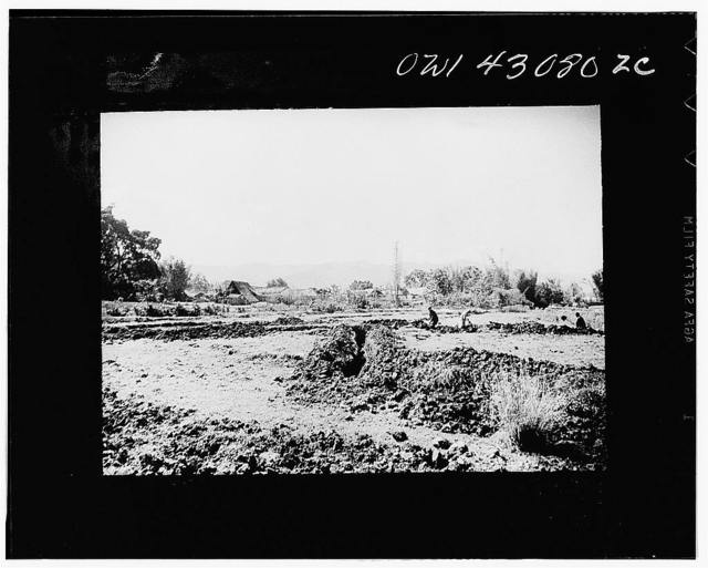 Public Health Service Investigation Commission to the China-Burma highway, Chefang Valley, China. Long view showing several connecting ditches