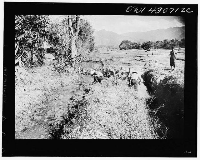 Public Health Service Investigation Commission to the China-Burma highway, Chefang (vicinity), China. Testing for anopheles minimus inlet and outlet irrigation ditches. No minimus were found in the ditch that is damned up, yet there were many in the ditch where water is flowing