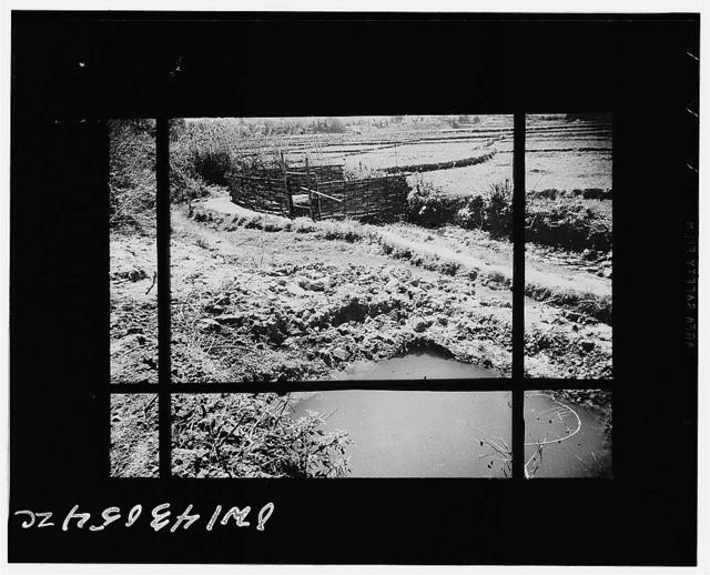 Public Health Service Investigation Commission to the China-Burma highway, Chefang (vicinity), China. Gambusia minnow hatchery in a spring at the edge of the rice fields. When the gambusia were put here, herons and other birds start to eat them. Thus the spring had to be covered with loosely woven mats; when the cattle trampled these a fence had to be built