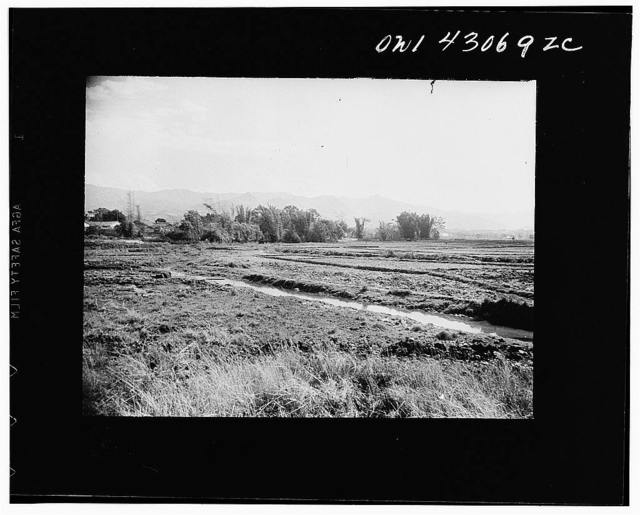 Public Health Service Investigation Commission to the China-Burma highway, Chefang (vicinity), China. The main drainage ditch for the irrigated rice fields. A small village lies behind the bamboo trees in the background