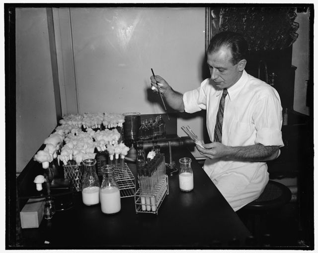 Ralph P. Tittsler, Associate Bacteriologist Bureau of Dairy Industry. Method for preserving cream. 5. The Department of Agriculture is experimenting and testing daily to determine the bacteria contained in cream that has been preserved by means of salt. In the photo is Ralph P. Tittsler, Associate Bacteriologist for the Bureau of Dairy Industry, 1-26-39