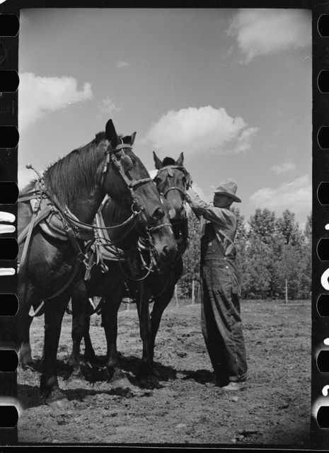 Resettled farmer, Fairfield Bench Farms, Montana