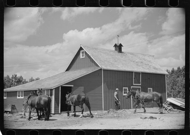 Resettled farmer with barn and team obtained through FSA (Farm Security Administration), Fairfield Bench Farms, Montana