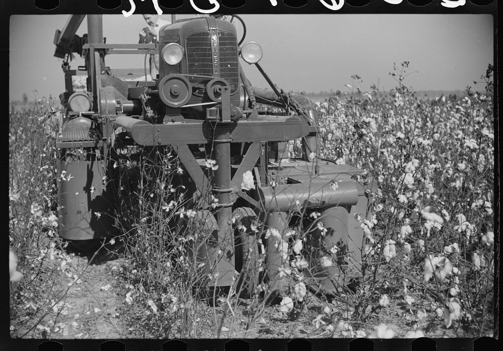 Rust cotton picker in cotton field, Cloverdale Plantation, Clarksdale, Mississippi Delta, Mississippi