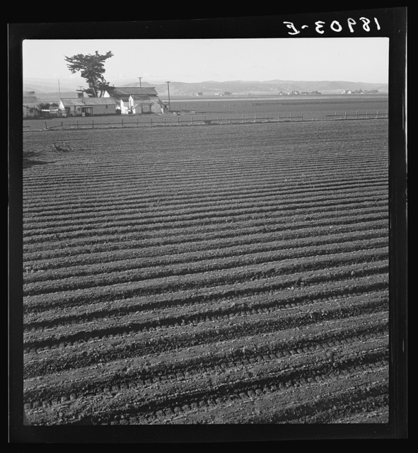 Salinas Valley, California. Large scale, commercial agriculture. This single California County (Monterey) shipped 20,096 carlots of lettuce in 1934, or forty-five percent of all carlot shipments in the United States. In the same year 73.8 percent of all United States carlot shipments were made from Monterey County, Imperial Valley, California (7,797 carlots) and Maricopa County, Arizona (4,697). Production of lettuce is largely in the hands of a comparatively small number of grower-shippers, many of whom operate in two or all three of these Counties. Labor is principally Mexican and Filipino in the fields, and white American in the packing sheds. Many workers follow the harvests from one valley to the other, since plantings are staggered to maintain a fairly even flow of lettuce to the Eastern market throughout the year